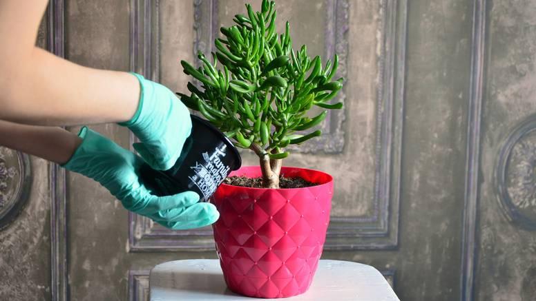 Sobne biljke - četiri savjeta uz koje će uvijek biti zdrave i lijepe