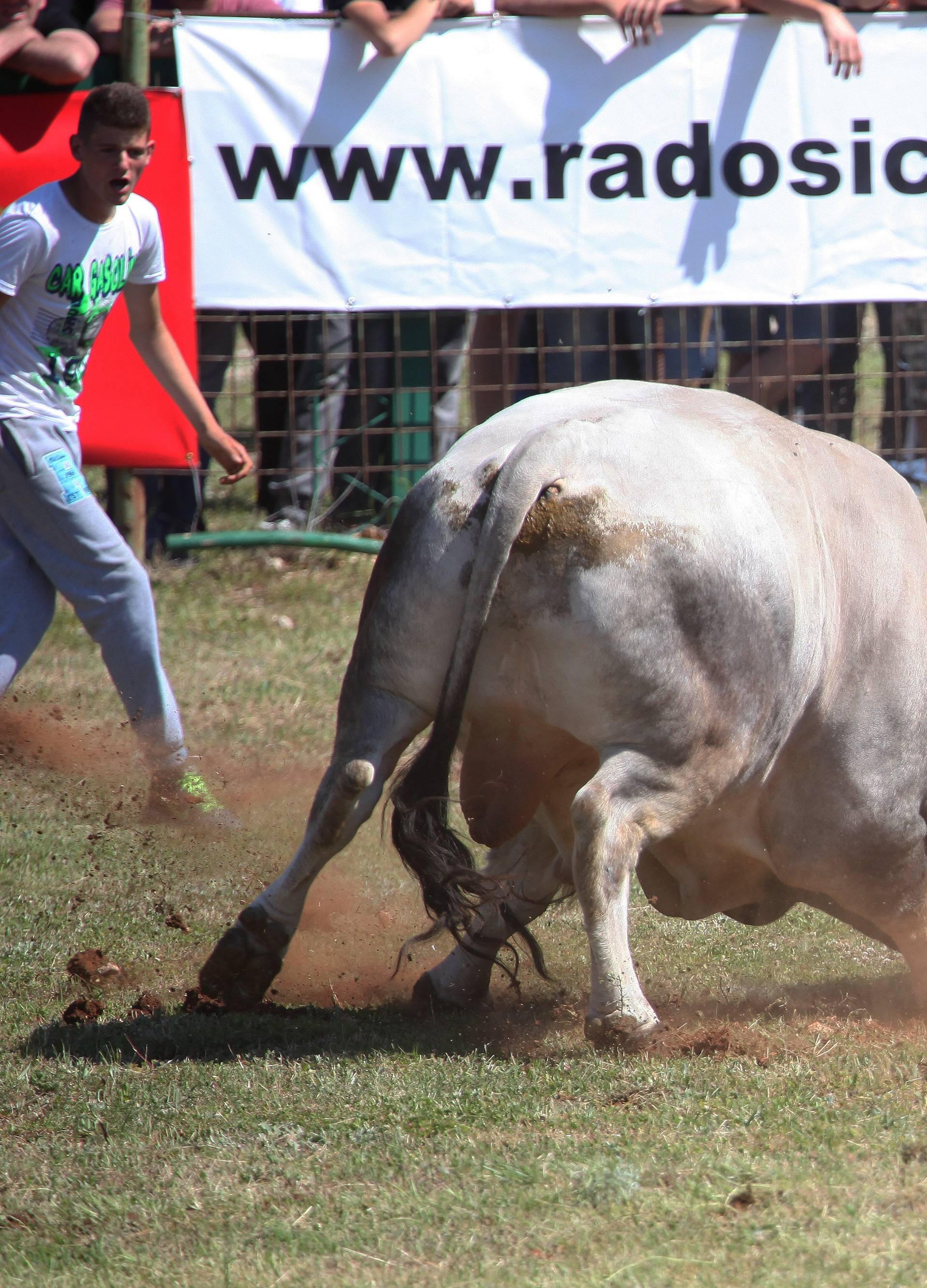 Borba bikova i natjecanje u starim seoskim disciplinama