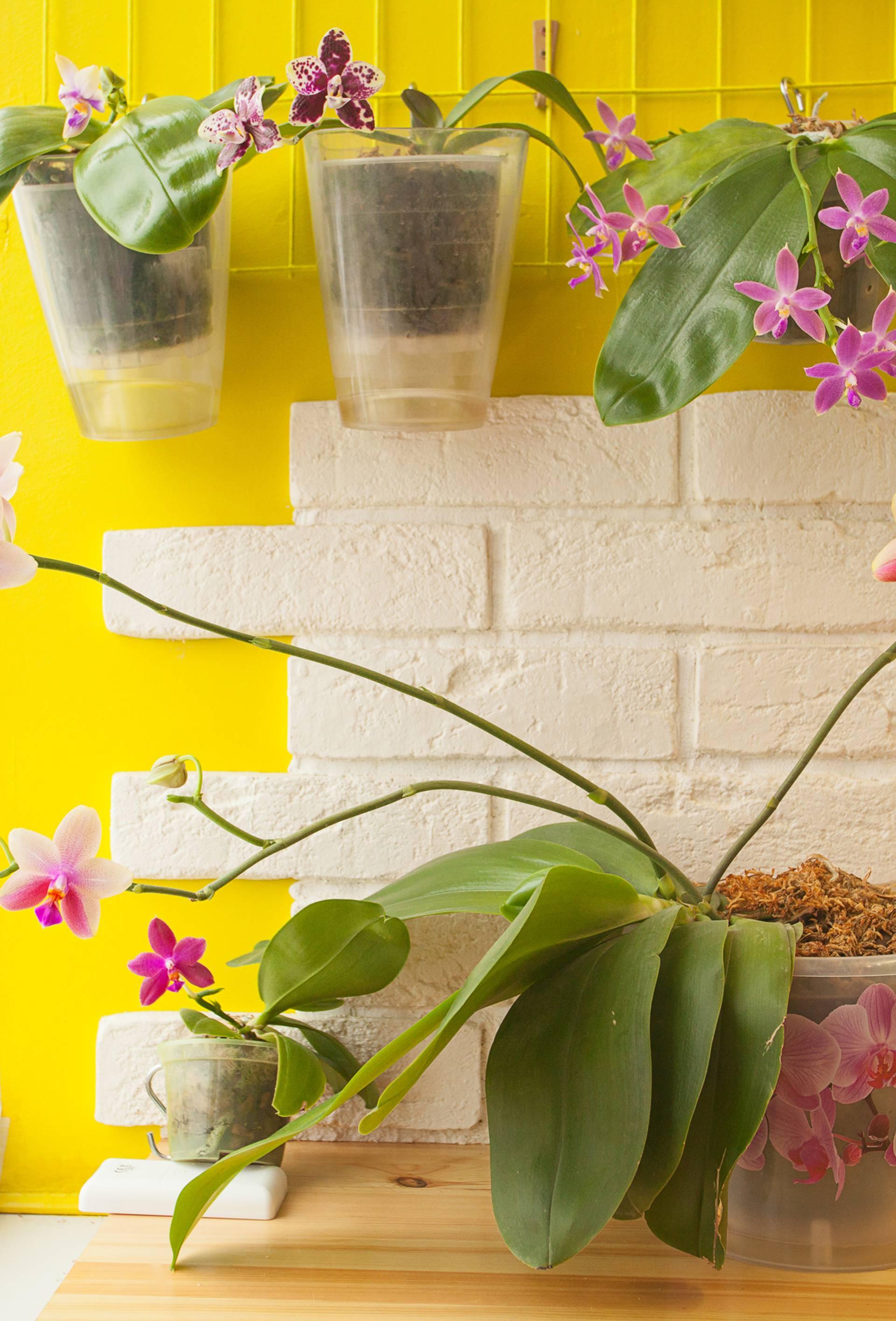 Presadite biljku u veću teglu što prije - posuda iz trgovine je guši