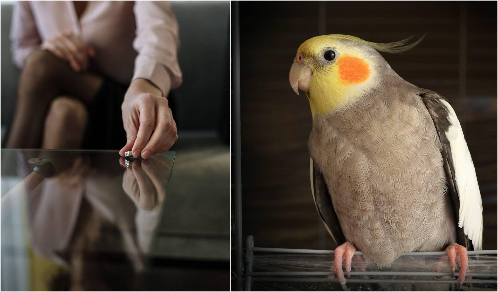 Papiga i razvod