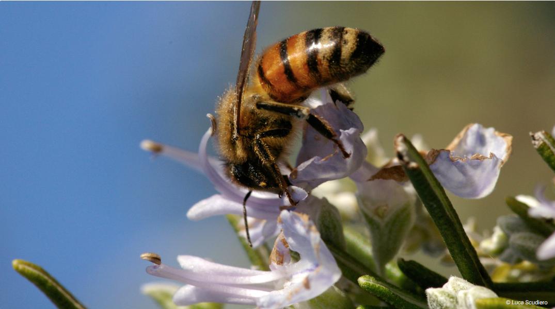 Posvoji pčelu da nastavi zujati našim planetom