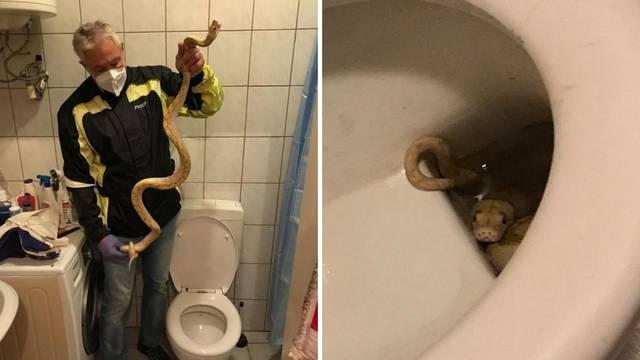 Ovo je piton koji je muškarca zgrabio za penis u wc-u: 'Susjed je zaboravio zatvoriti terarij'