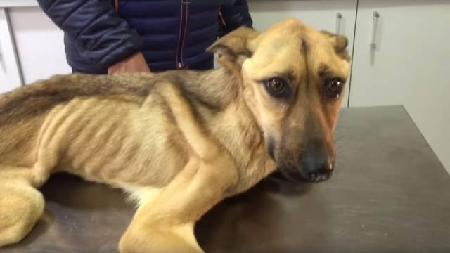 Čudesni oporavak: Psić imao tek 8 kg, nazvali su ga Barilla