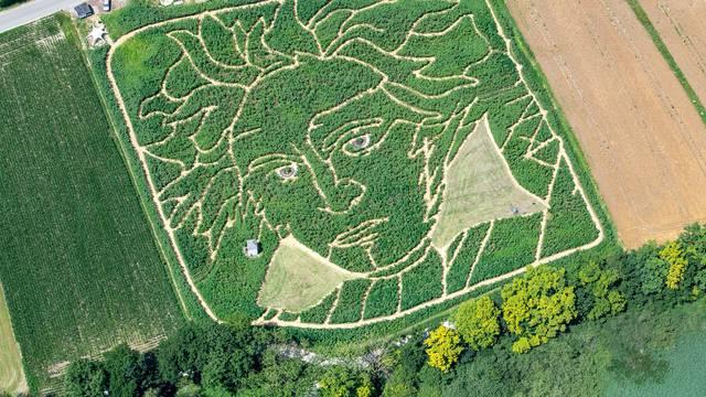 Golemi Beethoven osvanuo u polju suncokreta u Bavarskoj
