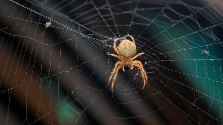 Imate punu kuću pauka? Super trik kako ih istjerati mentom