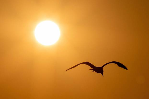"""Fažana:: Galebovi """"plove"""" zlatnim nebom pred zalazak sunca"""
