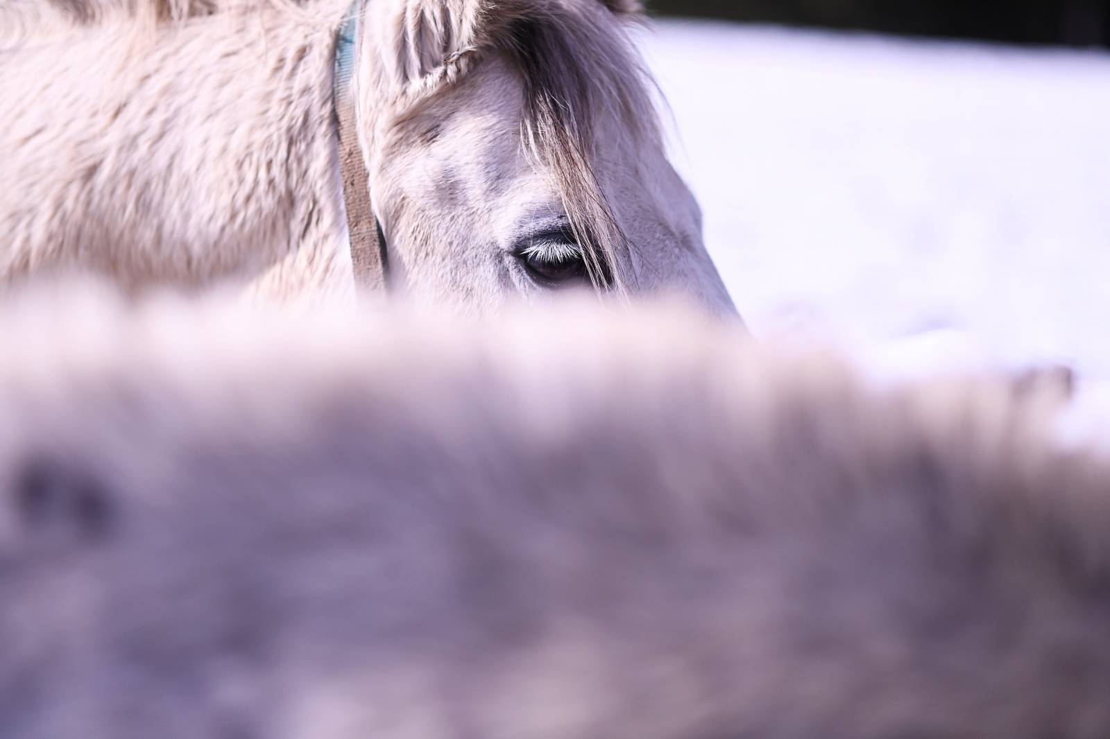 Konji uživaju na suncu na ranču u selu Jelov Klanac