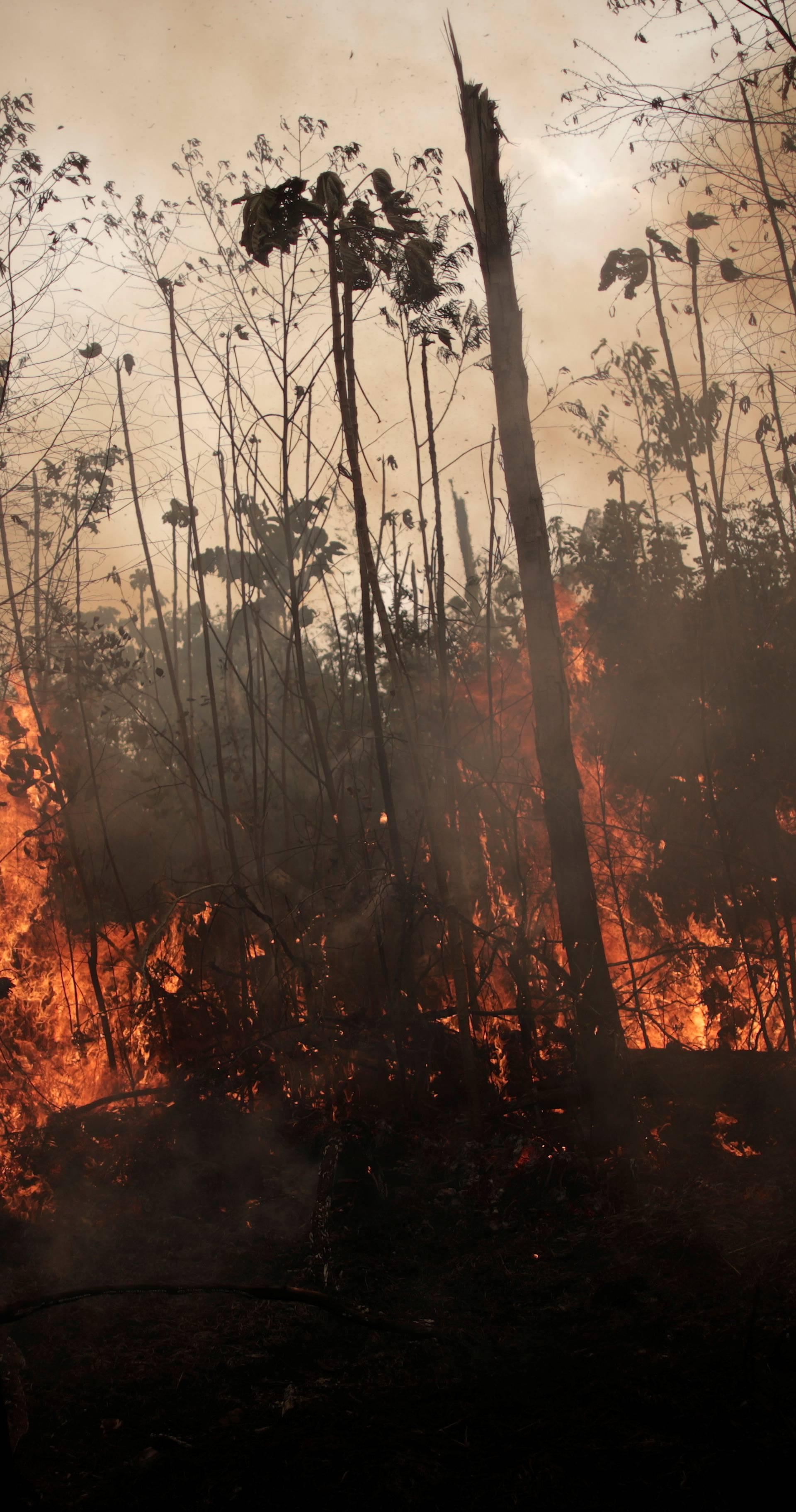 Žele pakt o očuvanju: Moramo se boriti za amazonski teritorij