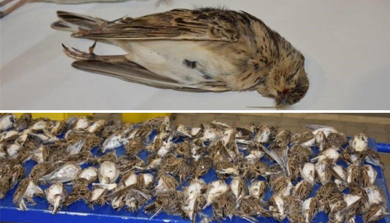 U autu mu našli mrtve ptice: Dobio je 30.000 kuna kazne