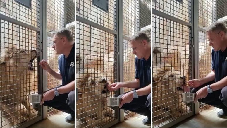 Ovako u Maksimiru treniraju lava: Ravnatelj zoološkog vrta Skok hrani ga golim rukama