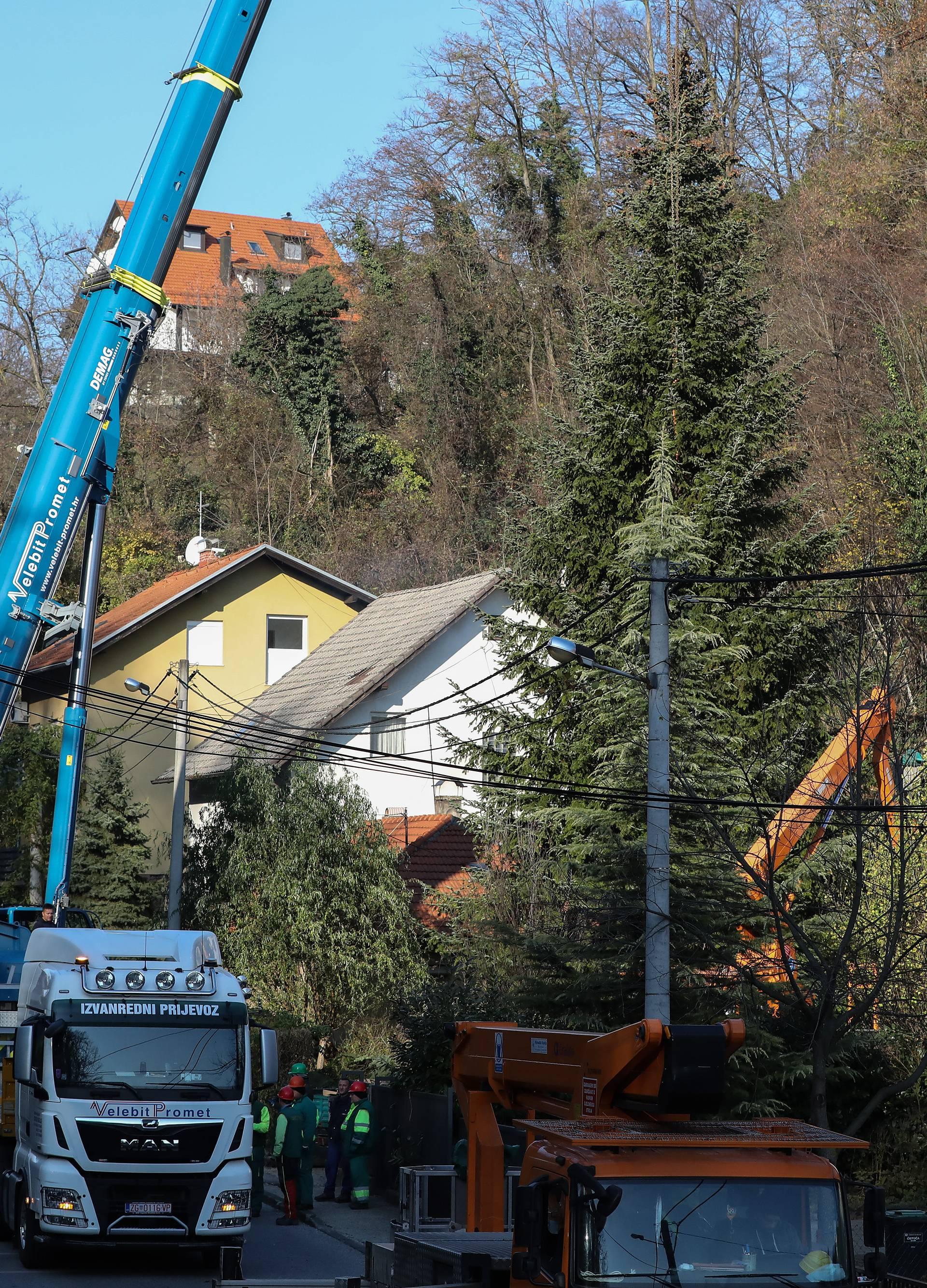 Zagreb: Donirao 20-metarski bor iz svog dvorišta koji će ukrašavati Jelačićev trg tijekom blagdana