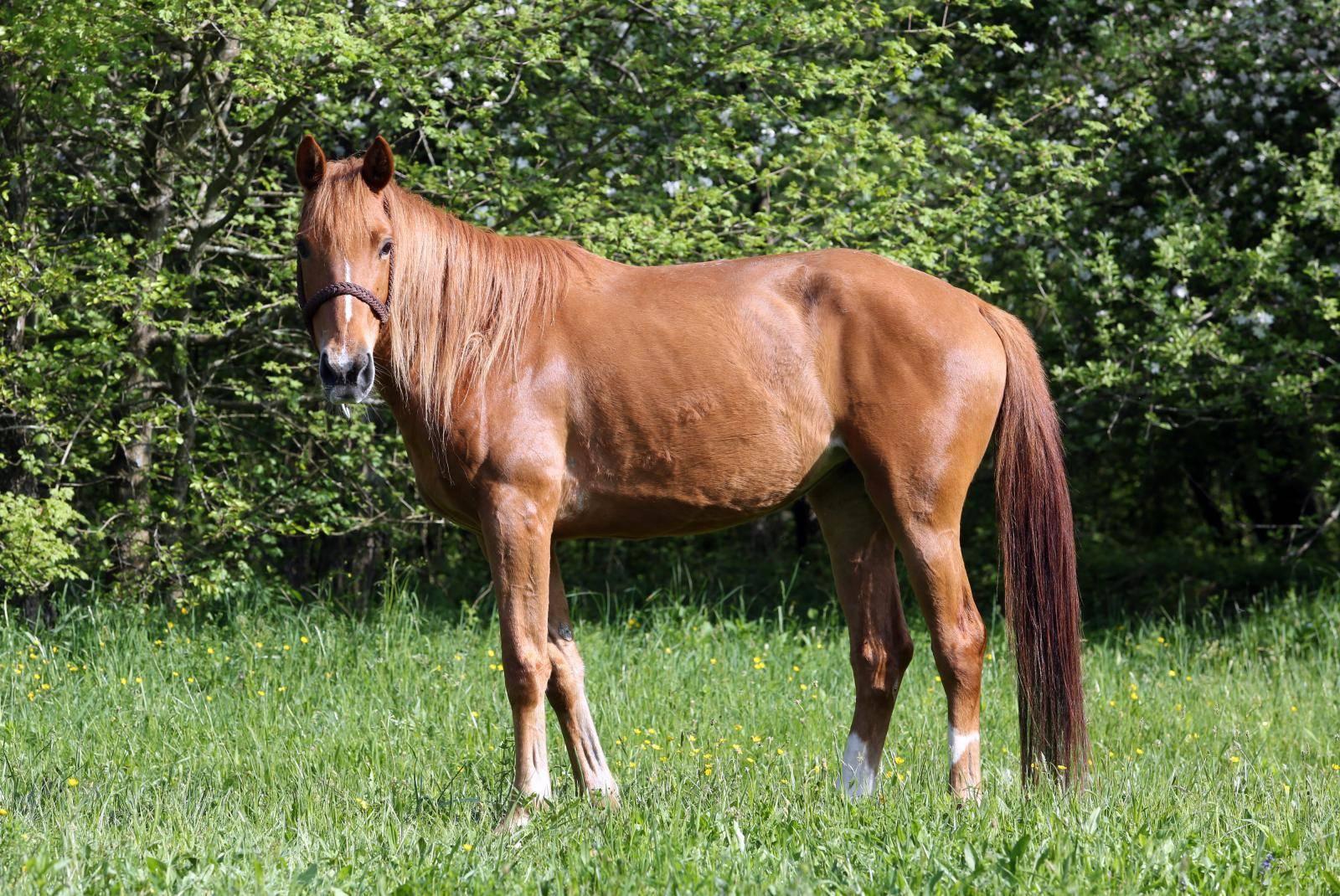 Hit slika na internetu: Konj je u potpunosti zasjenio mladenku