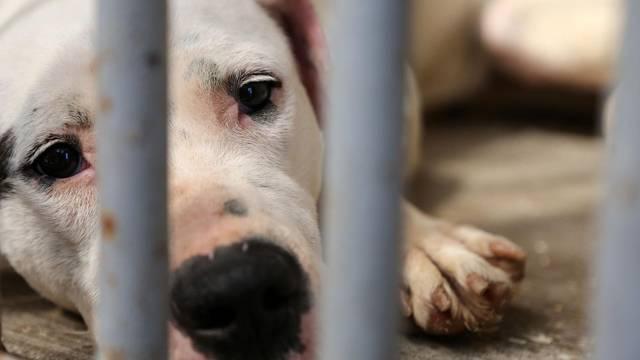 Zagreb: Konferencija povodom pravomoćne presude dvjema osobama za ubijanje i mučenje životinja