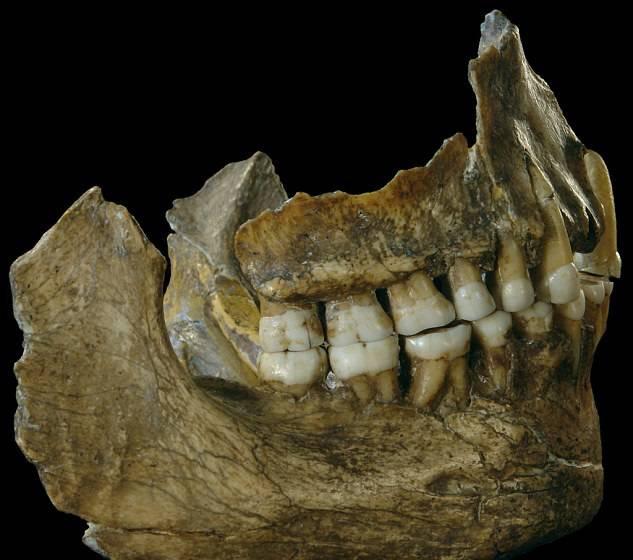 Neandertalci - dokazi