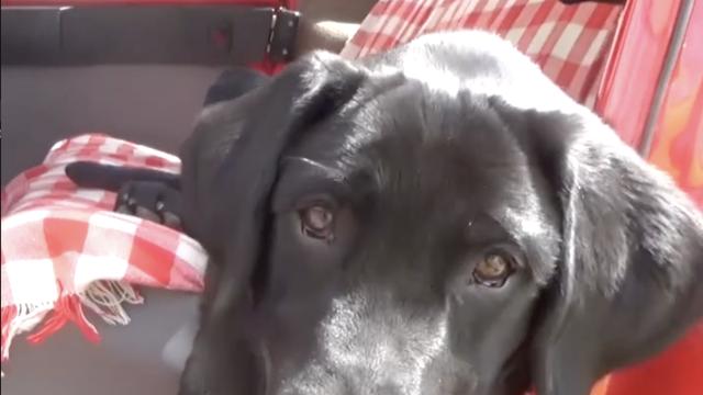 Pluton je prvi hrvatski pas koji može nanjušiti dijabetes