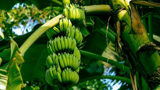 Novo lice 'otpada': Od stabljika banane nastaju ekstenzije za kosu, tepisi, otirači i košare