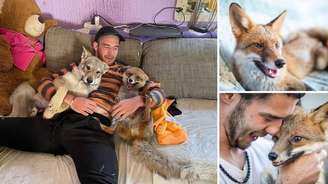 Neki za ljubimce imaju mace ili papige, ali Jasminu se po kauču valjaju dvije lisice i vučji pas....
