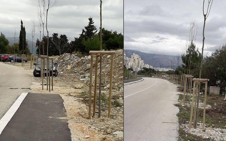 Mlada stabla u Splitu će rušiti zbog gradnje nove prometnice?