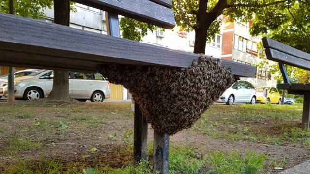 Spašavanje pčela u gradskim sredinama