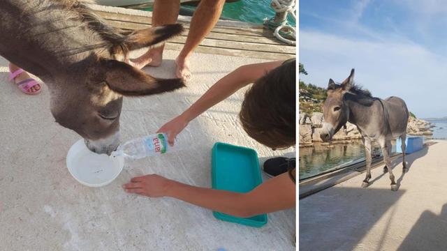 Svjetski mediji pišu o magarici Miji: 'Hrvat je ostavio da umre'