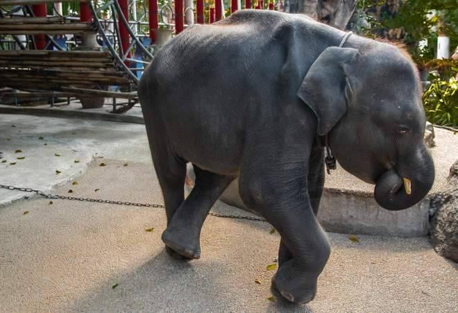 Užas ZOO vrtu: Malog slona sile da glavom trese na techno
