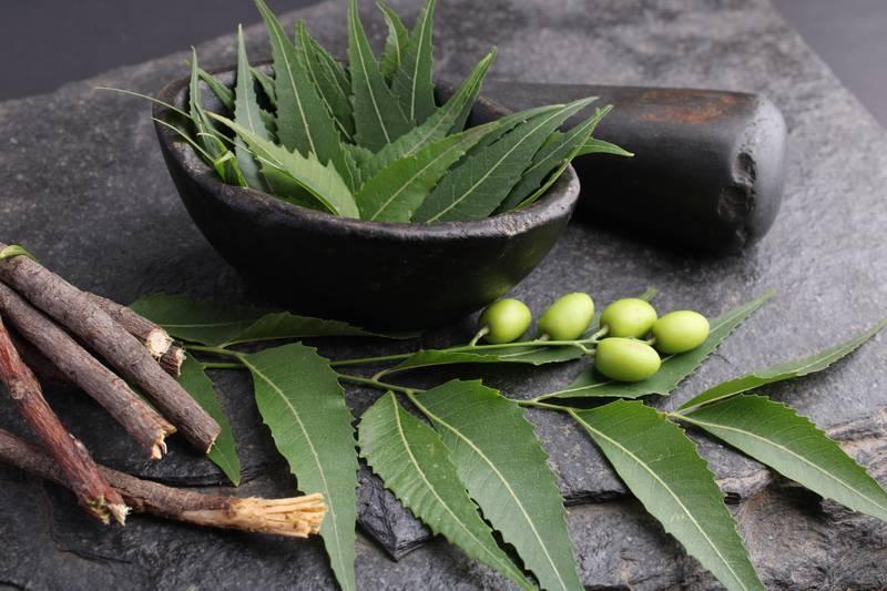 Nim je sveta indijska biljka koja pomaže kod mnogih tegoba, a i odličan je prirodni pesticid