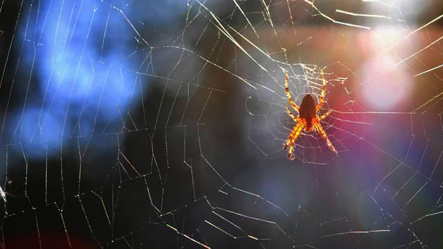Leće izrađene od paukove mreže mogle bi pomoći u snimanju unutrašnjosti ljudskoga tijela?