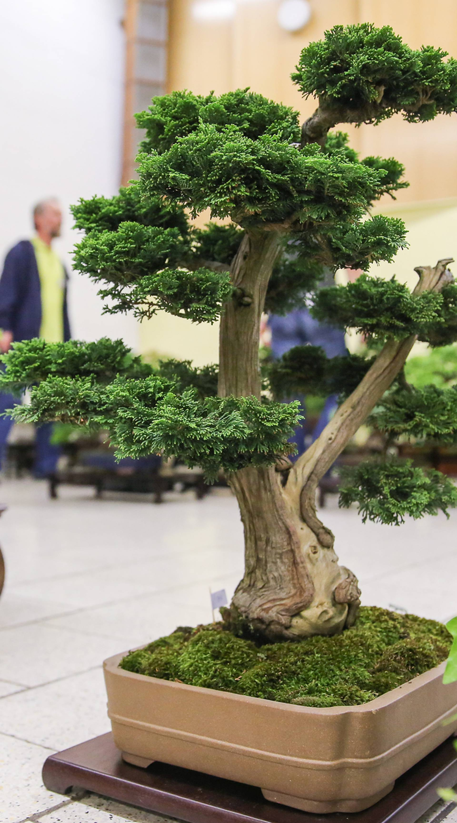 Bonsai exhibition in Leipzig