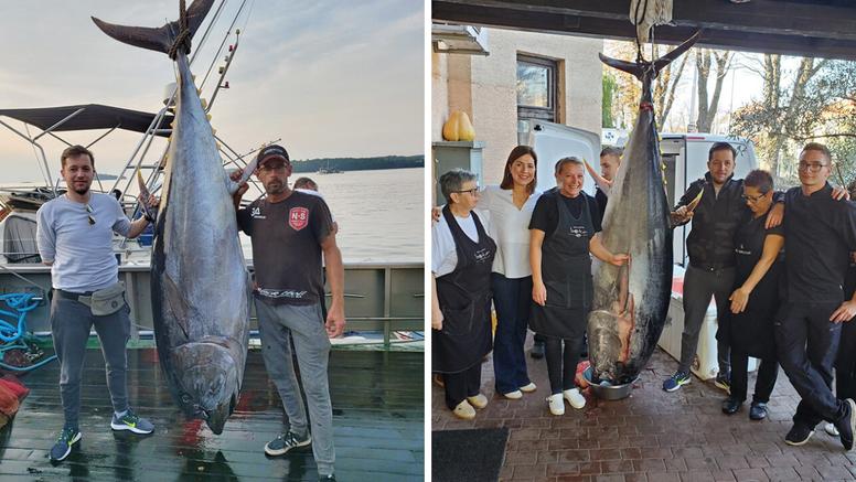 Kod Rovinja su ulovili morsku grdosiju, tunu od čak 250 kg!