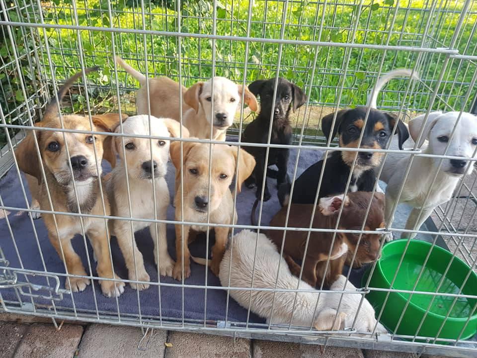 Izbacili 9 izgladnjelih štenaca: 'Hitno trebamo vašu pomoć!'