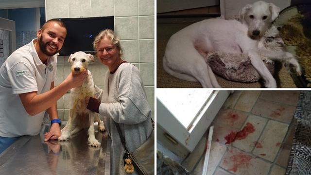 Krvoločni čopor uletio u kuću u Istri: Pas Puffy branio ukućane