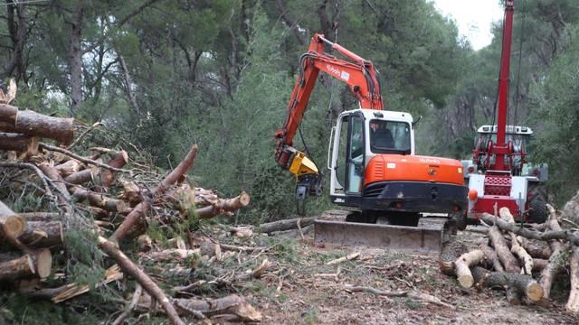 Tijekom sanacije Marjana je posječeno 38 tisuća stabala