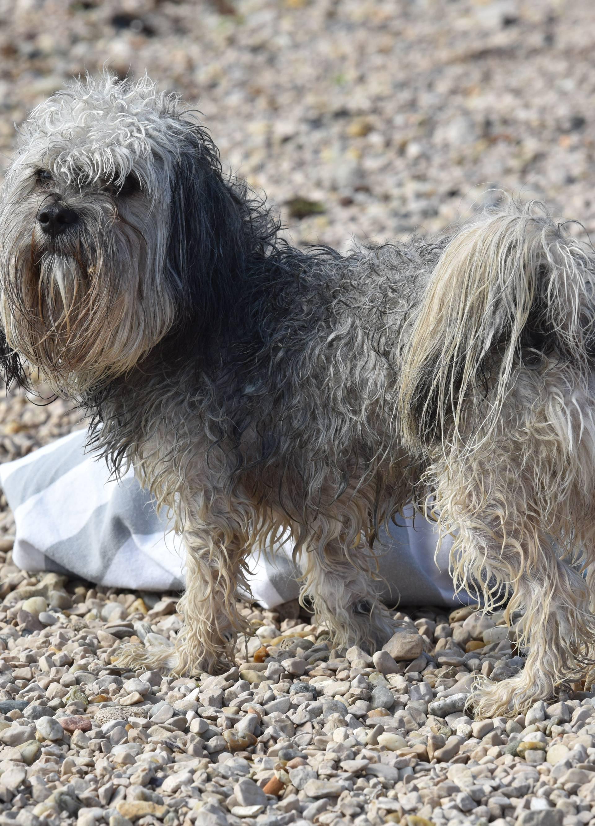 Vrijeme je za kupanje: Ovo su plaže na kojima su psi poželjni