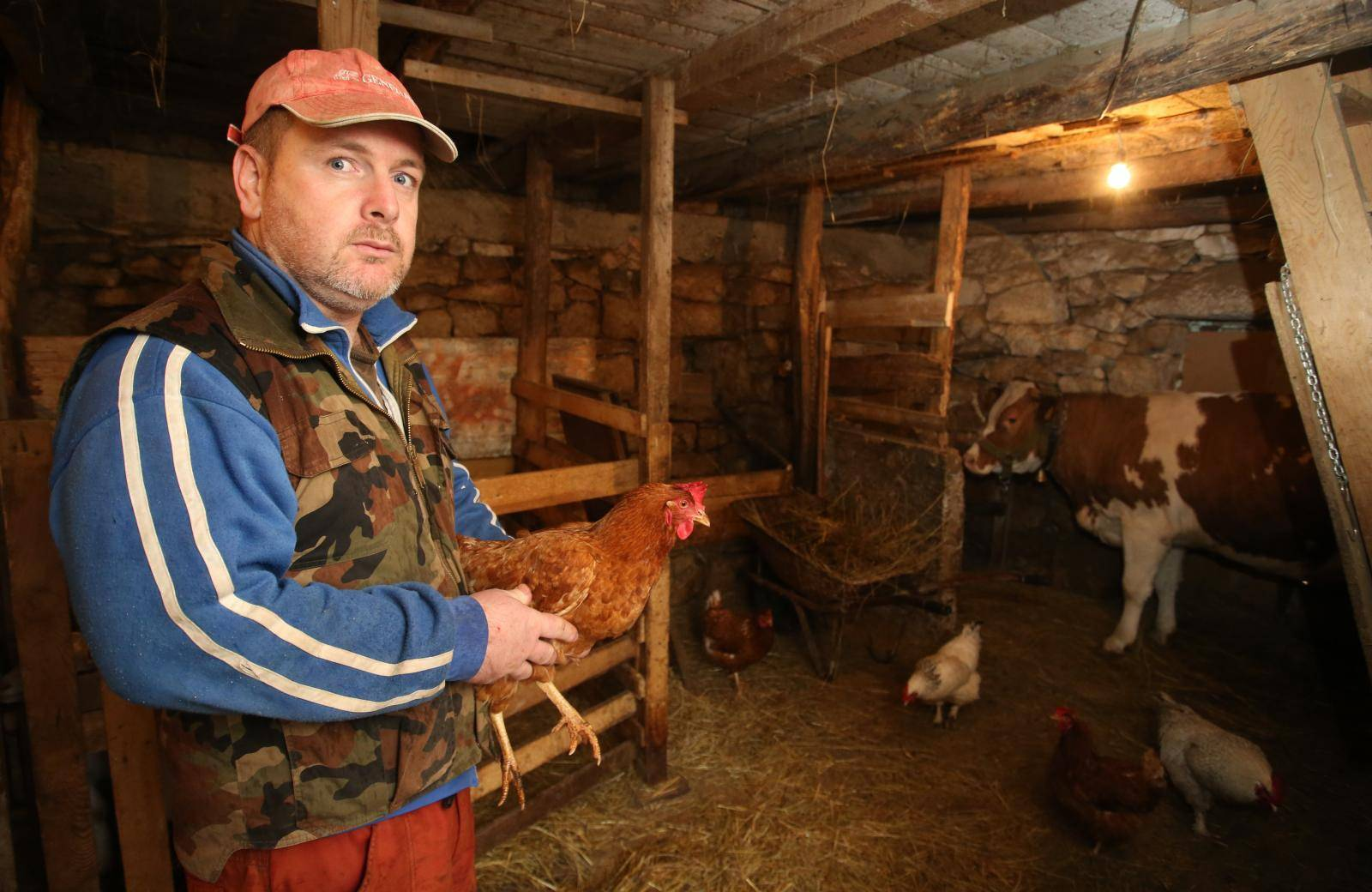 'Lisice su nam u dva mjeseca ukrale čak 70 koka, bojimo se'
