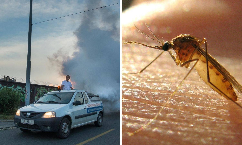 'Užasavamo se komaraca, baka nam je lani umrla nakon uboda'