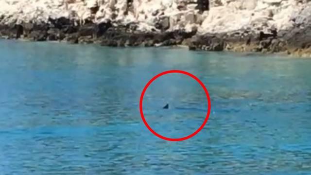 'Morski pas bio je dva metra od nas, imao je ožiljak na peraji...'