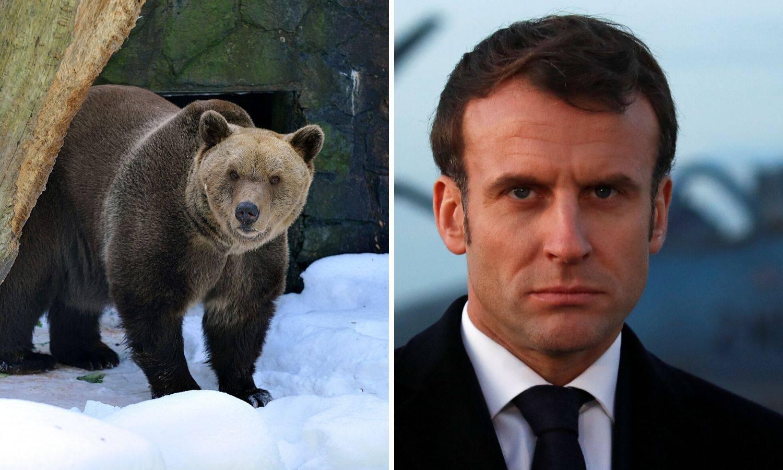 Macron rekao ne slovenskim medvjedima: Zabranili su uvoz