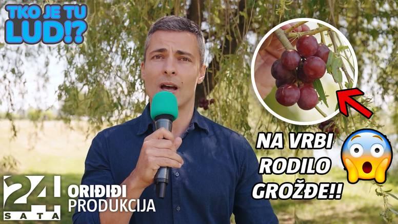 Na vrbi rodilo grožđe!? Zoran Pribičević u novoj epizodi skeča posjetio selo Donja Gemiština