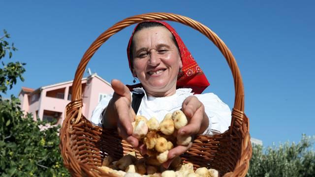 Sušenje smokava na tradicionalan način u Grebaštici