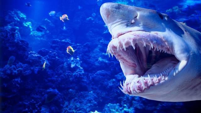 'Morski pas me zgrabio i vukao 20 metara. Sreća što je više želio moj ulov nego mene'