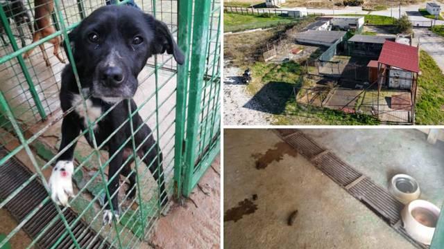 'Psi žive u fekalijama i zbog anksioznosti se samoozljeđuju'