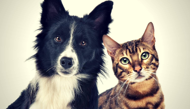 Zašto psi vole naganjati mačke? Ne rade oni to zato što ih mrze
