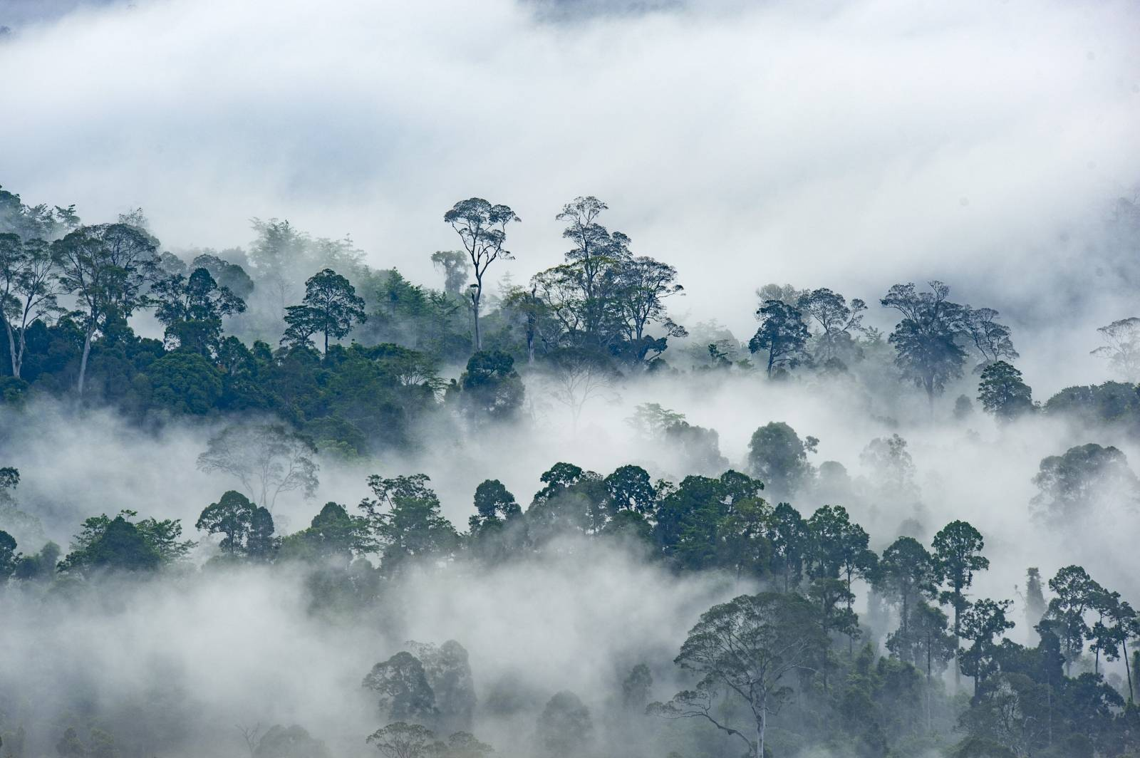 Deforestation and wildlife in Borneo