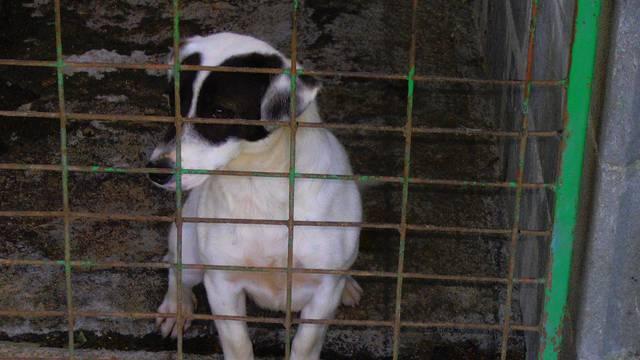Tužno gleda kroz kavez i čeka da je ubiju - možete je spasiti!