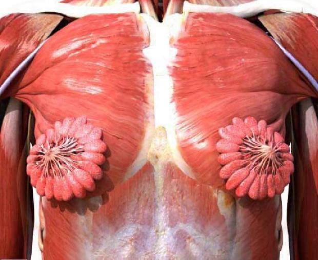 Znate kako izgledaju mliječne žlijezde? Mnoge je iznenadilo