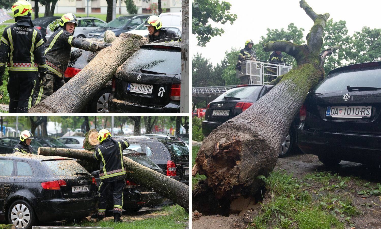 Drvo u Zagrebu palo na aute: 'Užas, samo je počelo pucati'