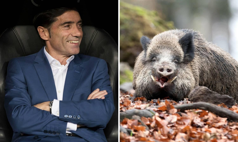 Rok, rok: Valencijin trener je doživio bliski susret s veprom