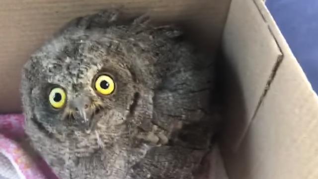 Zagrepčani spasili mladog ćuka koji je uslijed nevremena ispao iz gnijezda: 'Dobro je, već jede'