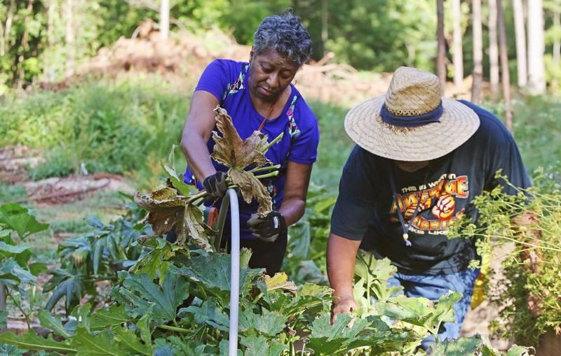 Besplatna hrana: Napušteno zemljište postaje jestiva šuma