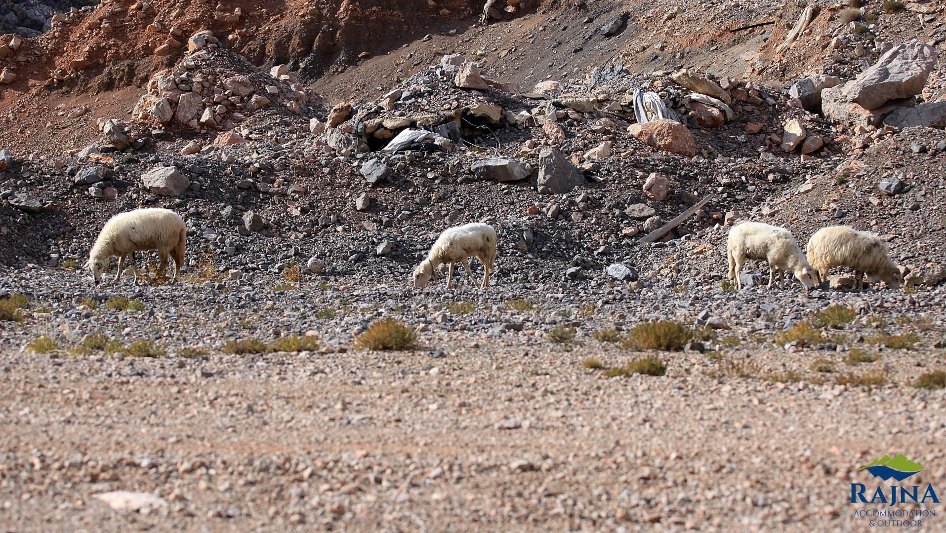 Frajer putuje s magarcem